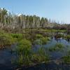 Green Wetlands