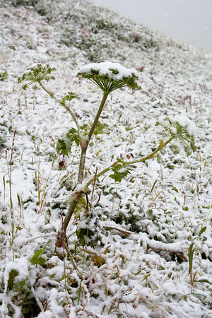 Snow-Covered Greens
