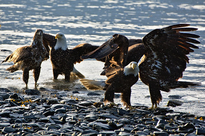 It's an Eagle Party