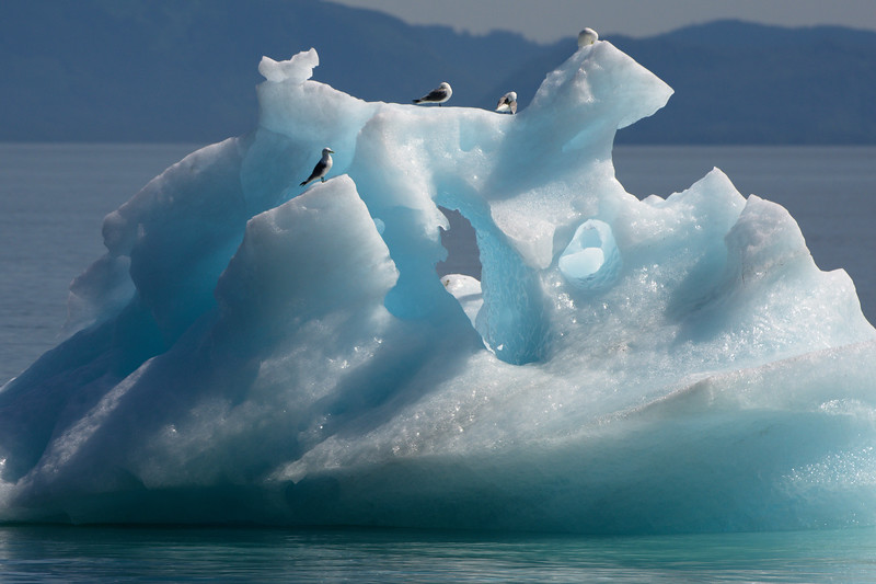 an iceberg floating in the waters of Prince William Sound with seagulls on top