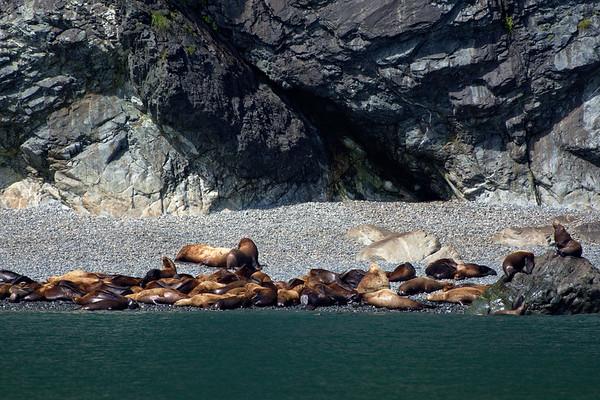 Sea Lions On Rocky Beach