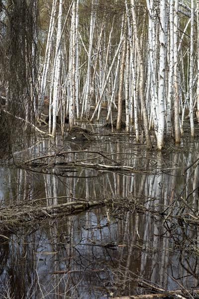 Reflective Marsh