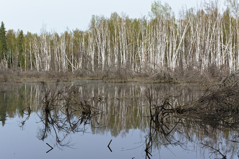 Creamer's Wetlands