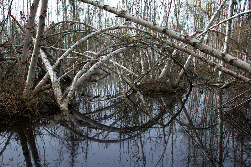 Reflective Tangle