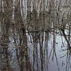 Birch Wetlands at Creamer's Field