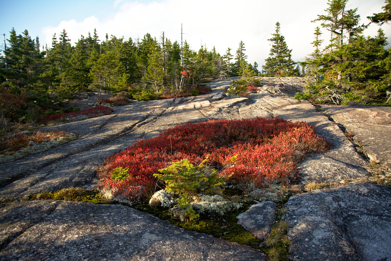 Growth in the Granite