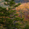 Spruce and Autumn Colors