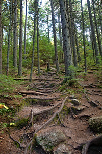 Rooted Trail