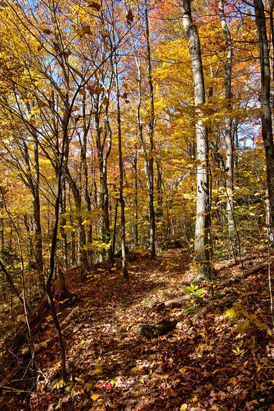 Fall Trails