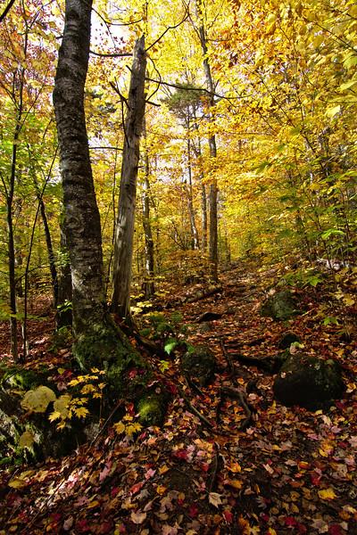 Autumn on the Trail