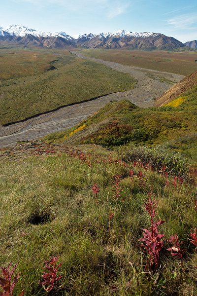 Fall Coming to Polychrome