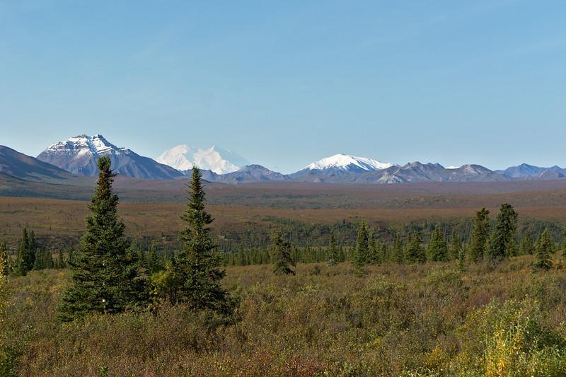 Denali Landscape