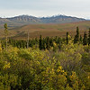 Primrose Landscape