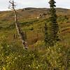 Primrose Ridge