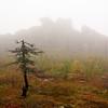 Granite in the Fog