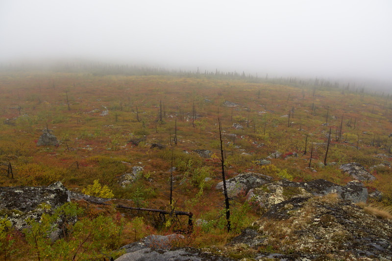 Open Landscape - Dense Fog