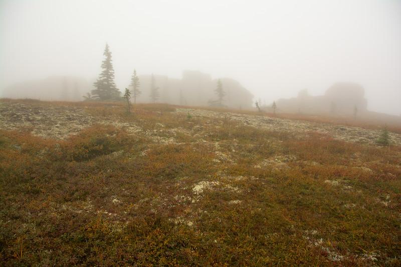 Tors in the Fog