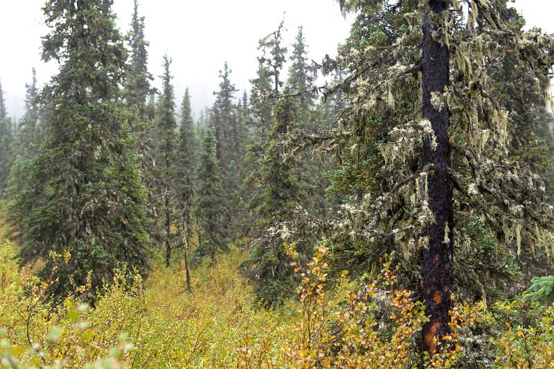 Brief, Wet Forest