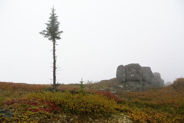 Spruce. Rock.