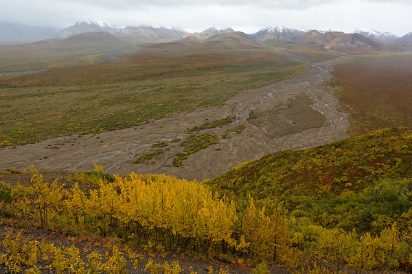 Braided Rivers and Fall Foliage