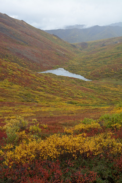 Pond in the Tundra