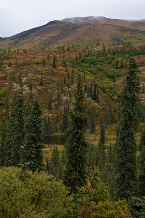 Foliage on the Hill