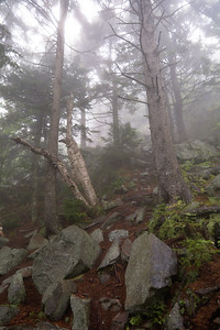 Fog, Light, and Forest