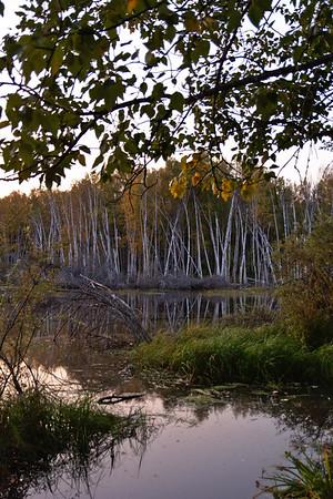 Seasonal Wetlands