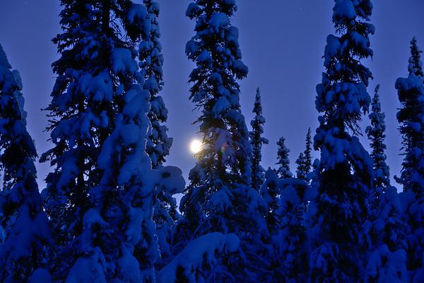 Moon through Spruce