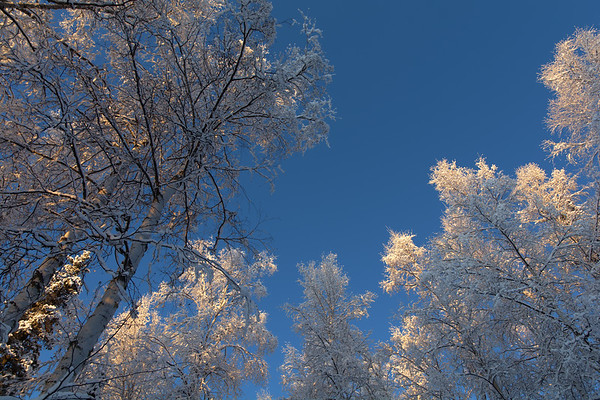 Snowy forest and blue sky