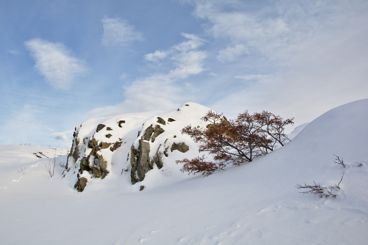 Snowy scene with rocks and trees in denali national park