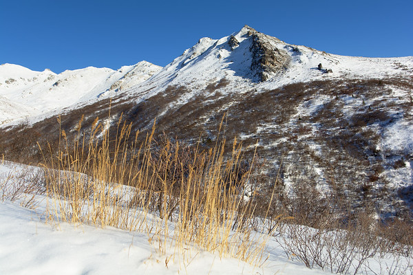 Golden Grasses and Mountains