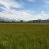 Shoup Landscape