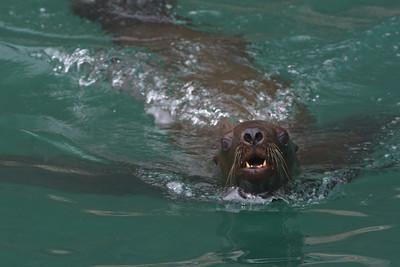 Steller Swim