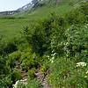 Into Alpine Flora