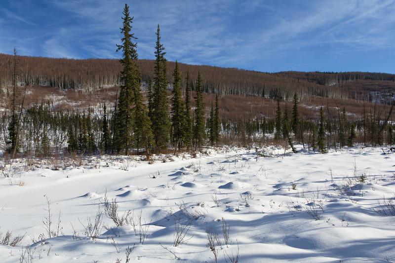Tors Trail Landscapes