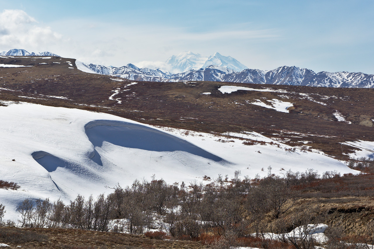 Denali from Sable Pass in May