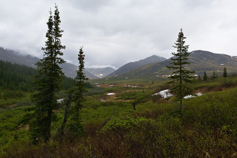 Rainy Day in Nome Creek