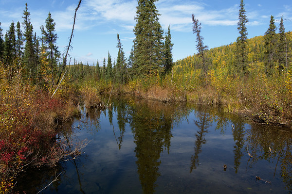 Spruce Reflections
