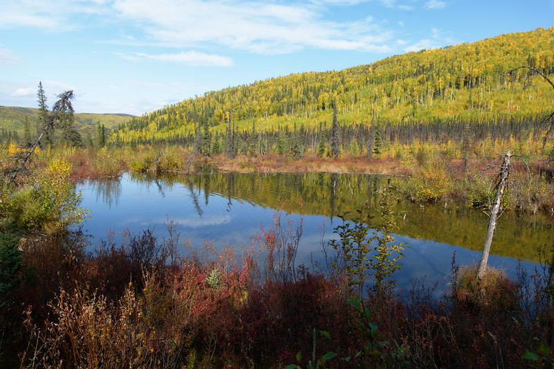 Beaver pond along the Granite Tors Trail near Fairbanks, Alaska. The hillside is starting to change to yellow fall colors.