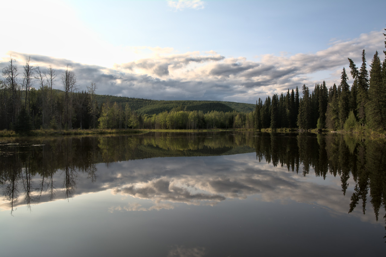 Forest reflections in a pond in the Chena River State Recreation Area