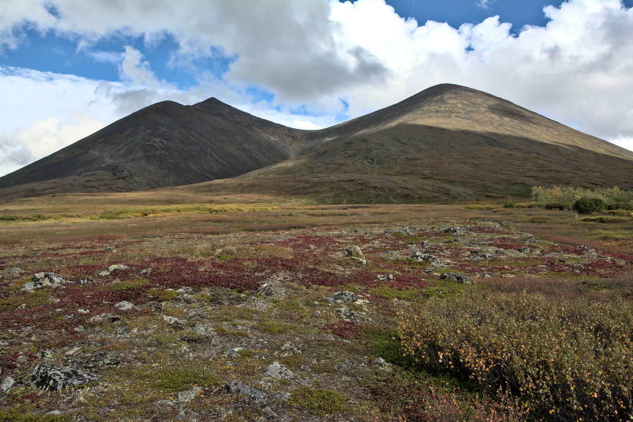 Fall colors in August in the Nome Creek Valley