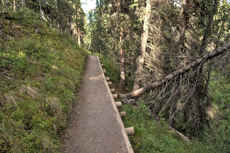 Denali National Park Entrance Trails (taiga trail)
