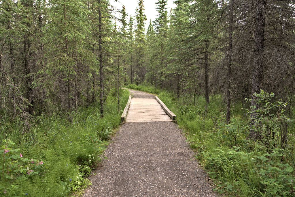 Section of the McKinley Station Trail (part of loop with Spruce Forest Trail), one of the Denali National Park Entrance Trails