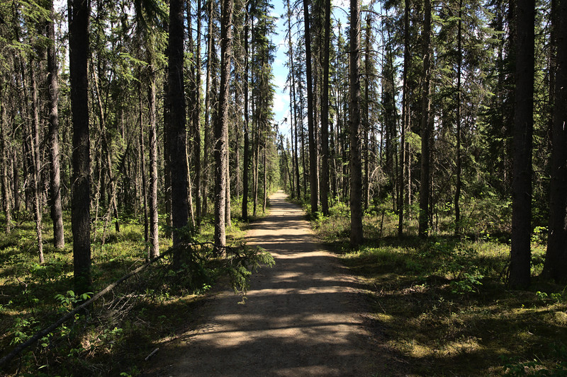 Path through a spruce boreal forest in Fairbanks, Alaska.
