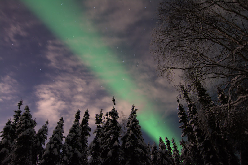 Aurora borealis over forest