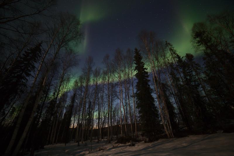 Aurora borealis in the twilight. April 22, 2021 - Fairbanks, Alaska