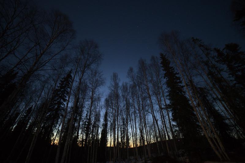 Spring light at midnight on April 22, 2021 in Fairbanks, Alaska