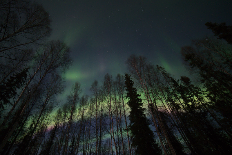 Aurora borealis in the twilight. April 22, 2021 - Fairbanks, Alaska