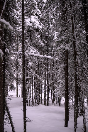 Skinny Spruce